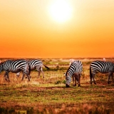 sunshine safaris